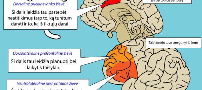 Savikontrolė smegenyse