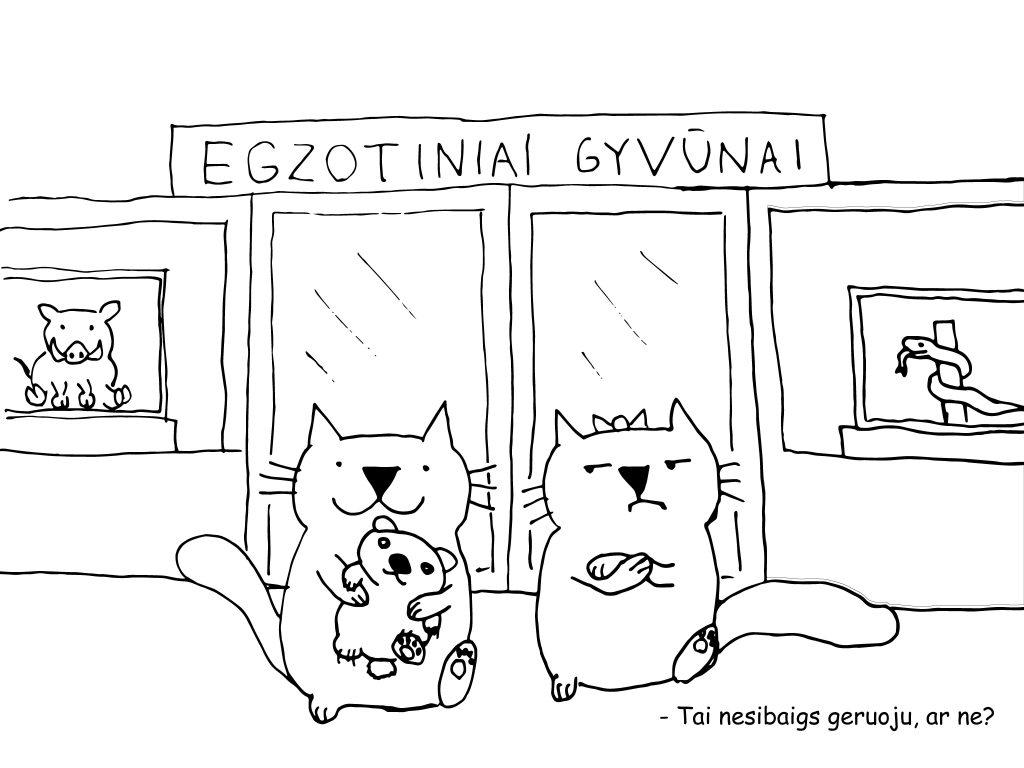 Čia turėtų būti paveiksliukas, kuriame katinas nešasi iš egzotinių gyvūnų parduotuvės mažą meškiuką.